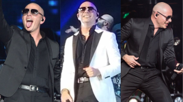 Pitbull Updates A Pitbull Fansite Your 1 Source For
